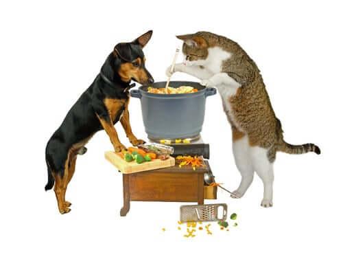 Hund und Katze am Kopftopf