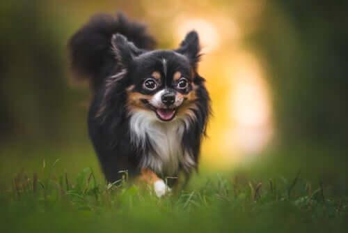 Insektenschutz für Hunde: Tipps und Ratschläge