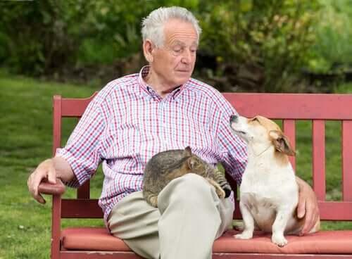 Mann mit Hund und Katze