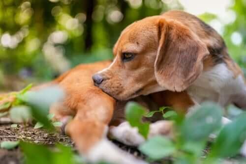 Mückenstiche jucken auch Hunde