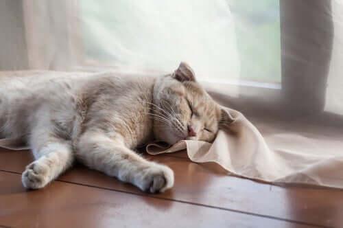 Der Tagesablauf einer Katze: Schläft viel
