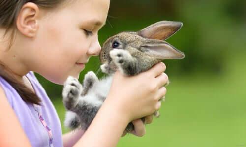 Welche Kaninchenrassen sind die besten Haustiere?