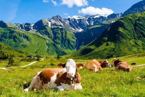 Viehzucht als Ursache und Lösung der Umwelteinflüsse