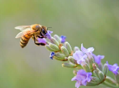 7 Kuriositäten über Bienen: Einfach faszinierend!