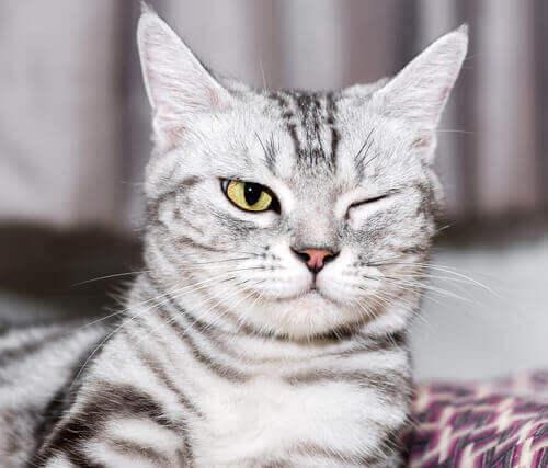Augenprobleme bei Katzen