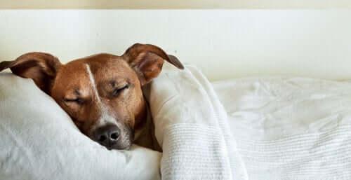 Bauchschmerzen bei Hunden