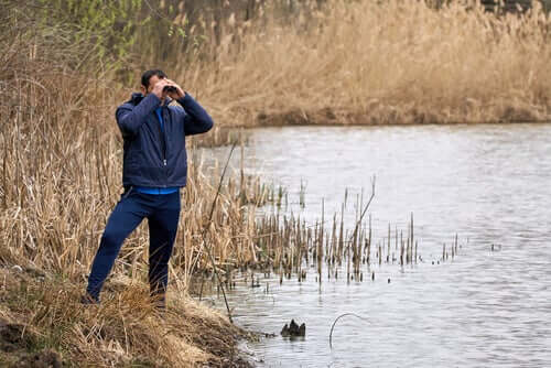 Beobachtung in freier Natur