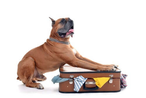 Bestimmungen für das Reisen mit Hunden ins Ausland