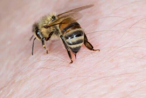 Bienen sind friedlich