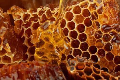 Bienenprodukte für Hunde