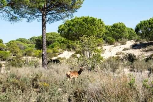 Wissenswertes über das Natura 2000 Netzwerk