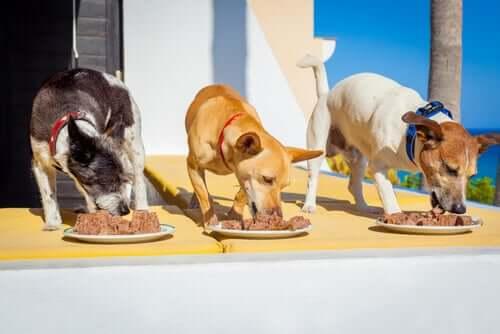 Drei Hunde schlemmen