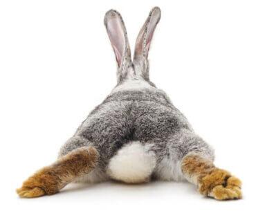 Durchfall bei Kaninchen - was tun?