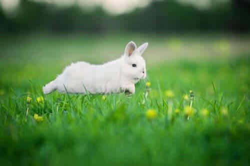 Ein Kaninchen braucht Bewegung