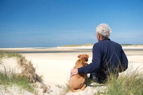 3 Gesundheitsprobleme älterer Hunde