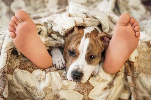 Haustier im Bett: Ist das sicher?