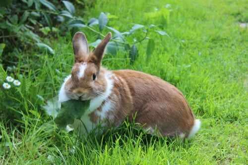 Kaninchen frisst