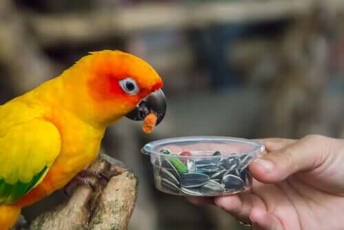 Papagei frisst Samen