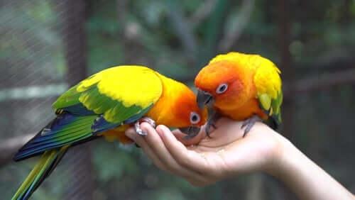 Papageien fressen Futter aus der Hand