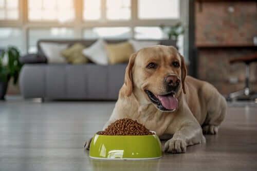 Präbiotika für Hunde