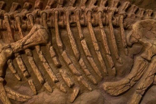 Fossile Skelettreste