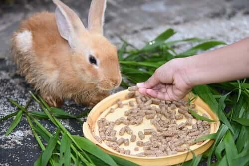 Trockenfutter fürs Kaninchen