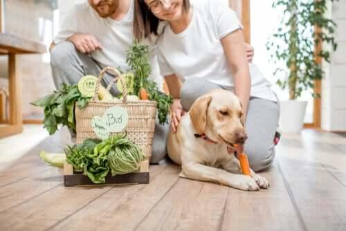 Vegane Haustiere: Hunde