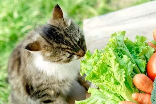 Vegane Haustiere: Katzen