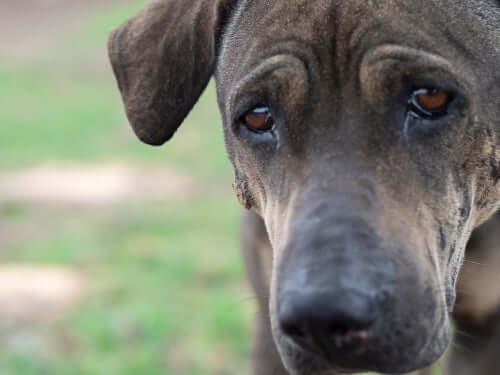 Weinen Hunde eigentlich wie Menschen?
