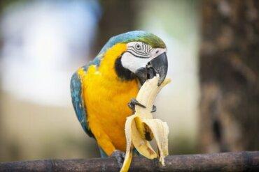 Welche Nahrung kann ich meinem Papagei füttern?
