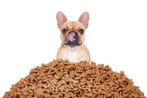 Wie man am besten die Futterportionen für den Hund berechnet