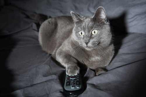 4 Gründe für das nächtliche Verhalten von Katzen