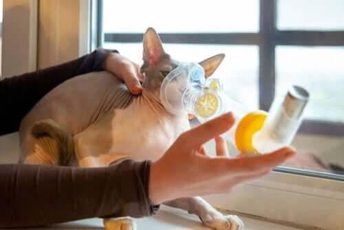 Atembeschwerden bei Katzen: Ursachen und Symptome