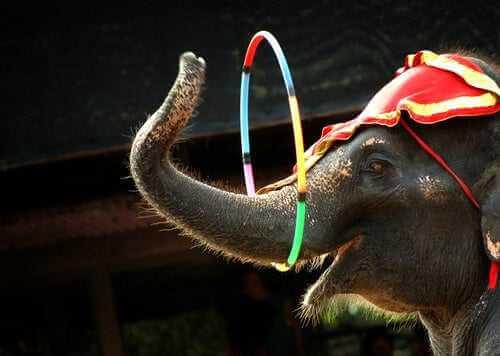 CITES-Abkommen zum Schutz der Elefantens