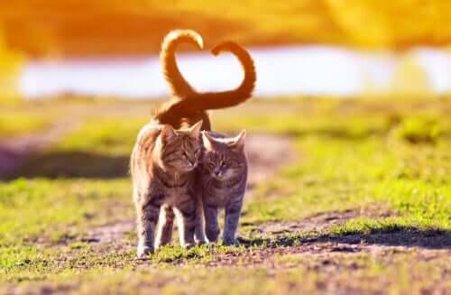 Der Katzenschwanz und was er dir verrät