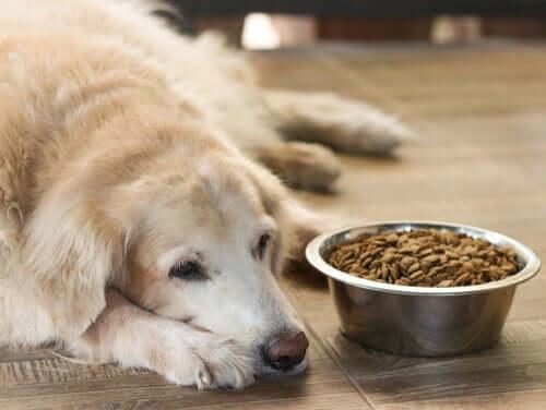Futter für Seniorenhunde