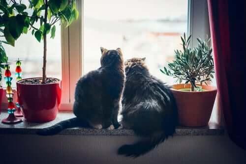 Hauskatzen am Fenster