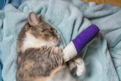 Hinken bei Katzen: häufige Ursachen und Behandlung