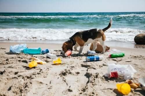 Umweltverschmutzung: Hund am Strand