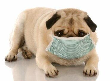 Umweltverschmutzung: Auswirkungen auf die Gesundheit von Hunden