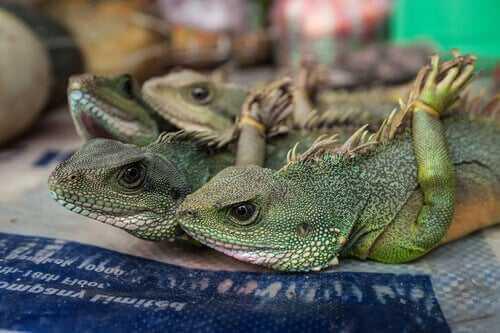 Illegaler Tierhandel und tierische Medienstars