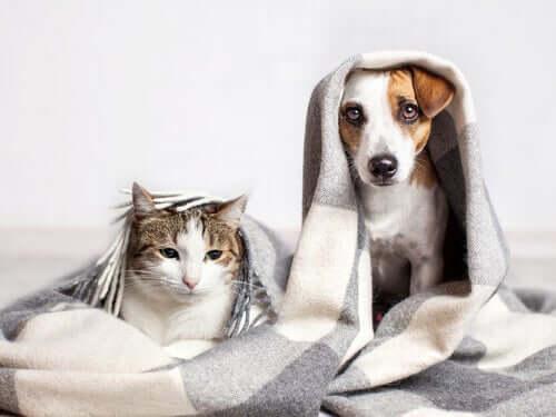 Katzen, die wie Hunde denken