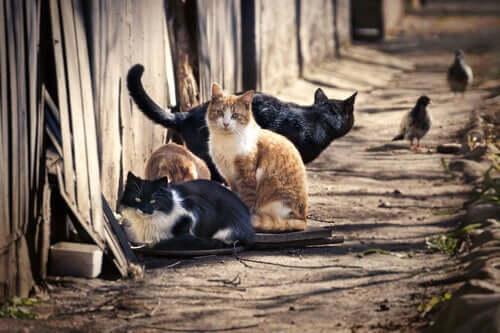 Katzen übertragen Krankheiten