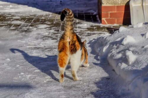 Warum riechen manche Katzenhintern schlecht?