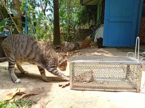 Leptospirose bei Katzen: Symptome und Behandlung