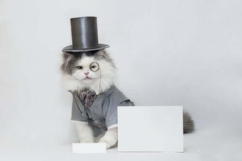 Katze mit Hut - tierische Medienstars