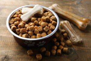 Trockenfutter für Hunde: 4 Gründe, es zu vermeiden