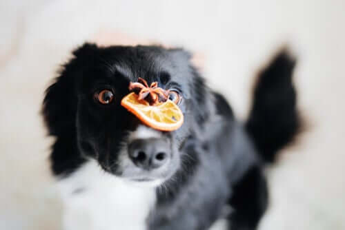 Vitamin C bei Hunden: Was sagt die Wissenschaft dazu?