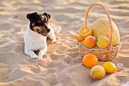 Vitamin C bei Hunden