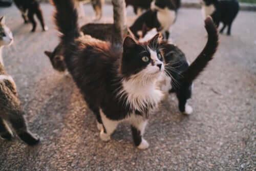 Welche Krankheiten können uns Katzen übertragen?